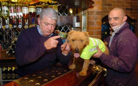 Dog barred from pub unless she wears high-vis vest