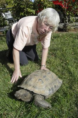 Beloved 150-year-old desert tortoise returned to Cupertino home